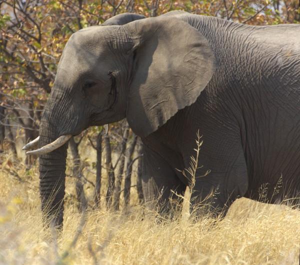 12. Tag (Mi., 29.8.): Etoscha Nationalpark