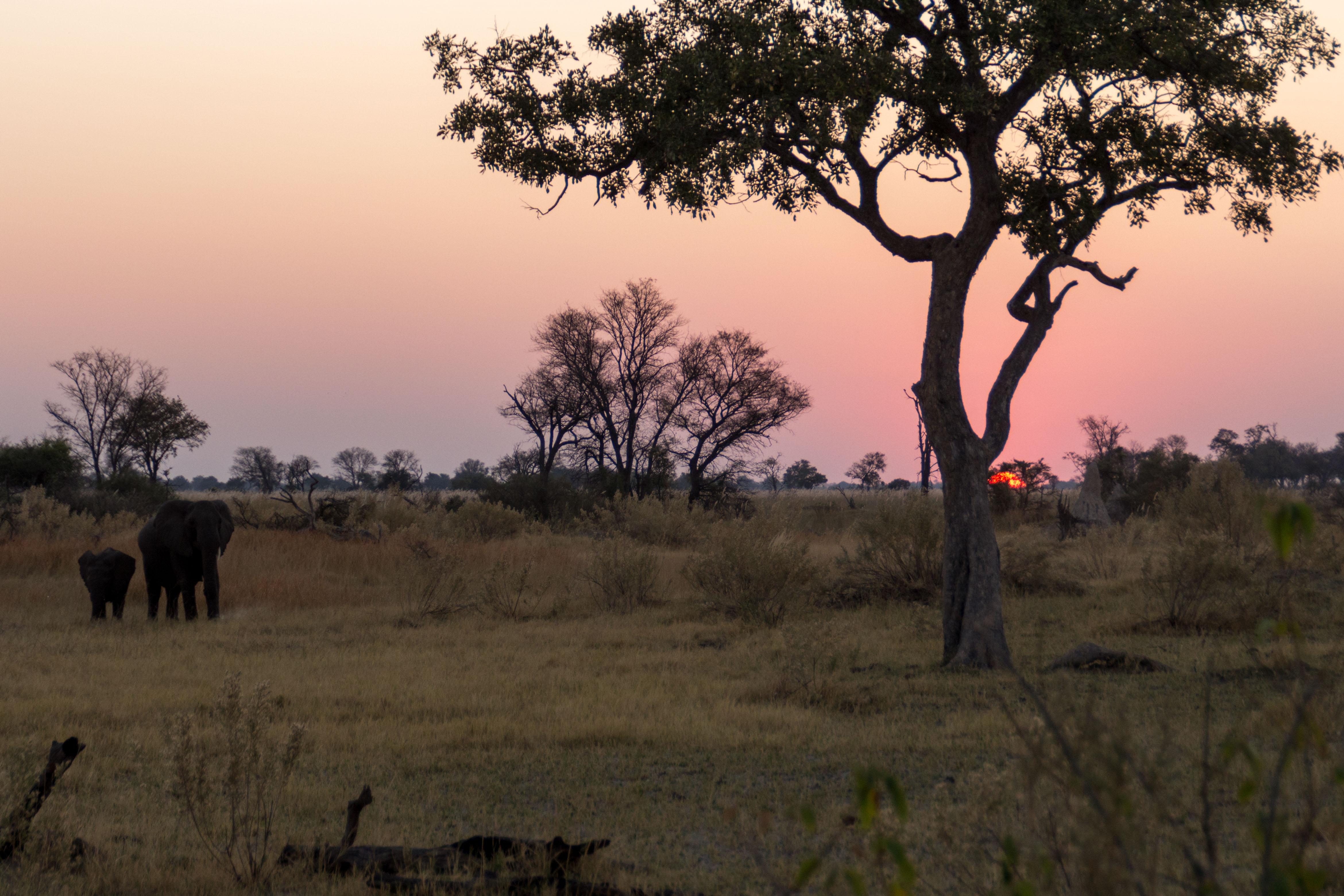 22. Tag (8.9.): Abschied von Afrika